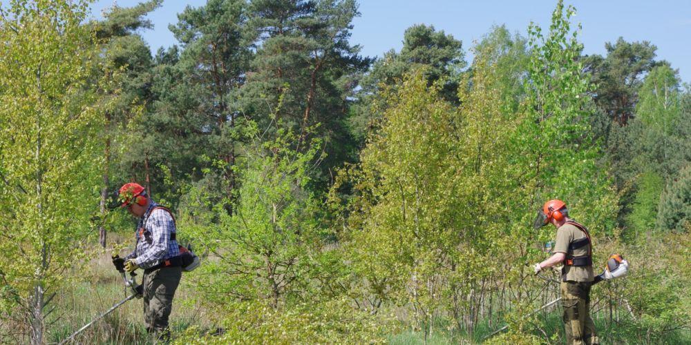 7541ffdda1eda3 Hanse Forst – Waldwirtschaft natürlich nachhaltig