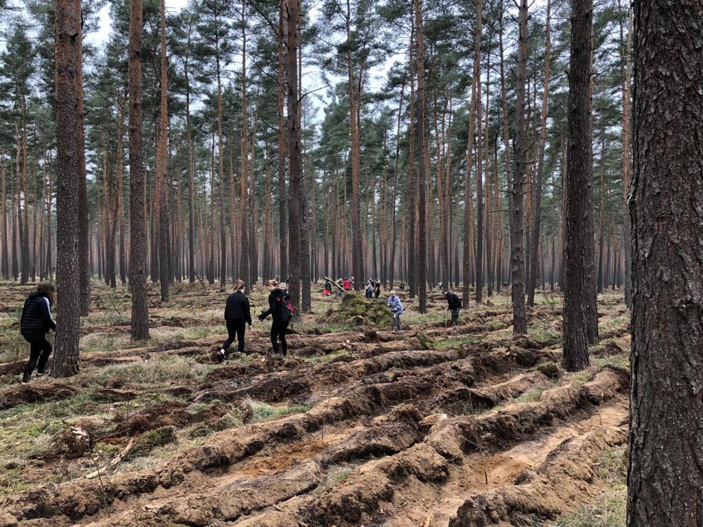 df4033f85ea95c Baumpflanzungen – Hanse Forst